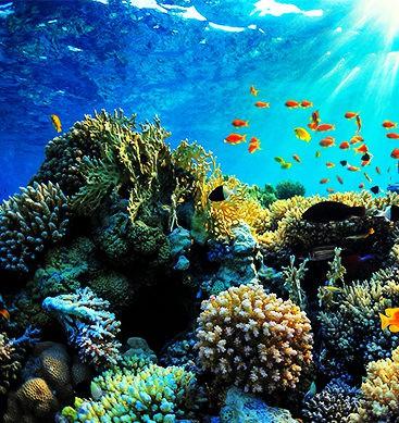 How Dead Is Great Barrier Reef?