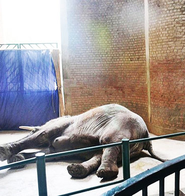 Lahore Zoo Administration Decides To Bring New Elephant