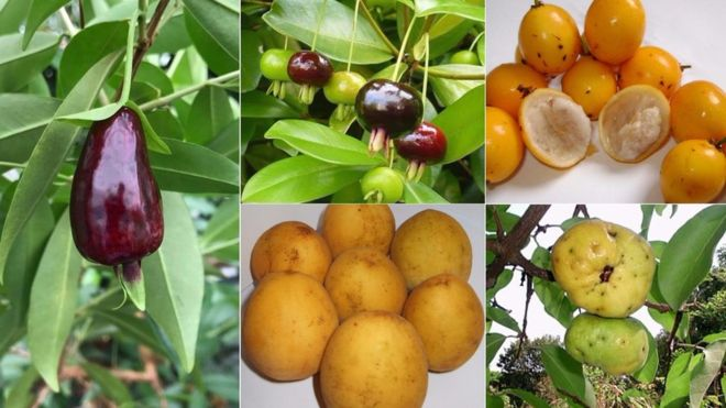 "The unknown Brazilian fruits that can become the ""superfoods"" of the future"