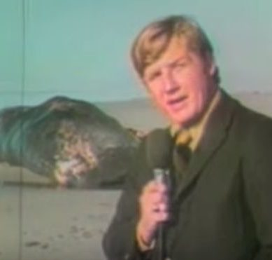 """The whale that explodes"": the curious story behind one of the most viral videos in internet history"