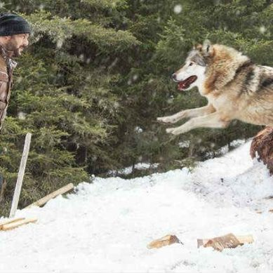 Tiger Zinda Hai new still: Salman Khan is pitted against a deadly wolf. Will he return victorious?