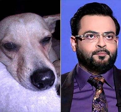 Murphy and Aamir Liaquat: Graduates of Ashwood University