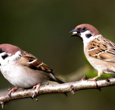 How seeing birds near your home can improve your mental health