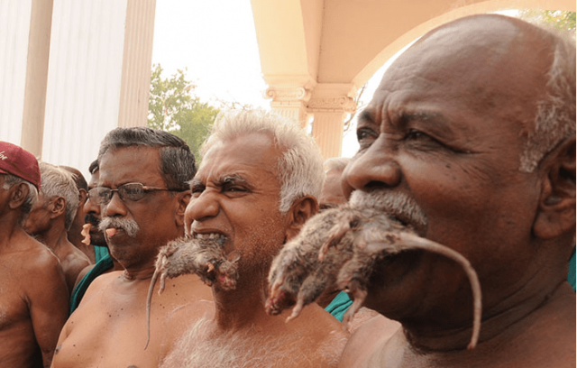 Starving Indian Farmers Eat Rats as Protest in Delhi