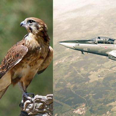A new Shaheen Emerged: PAF raises new JF-17 squadron at Samungli