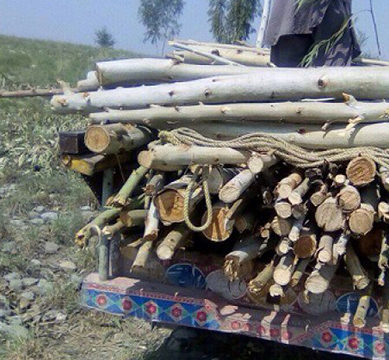 Timber-mafia clear-felling trees profusely in K-P