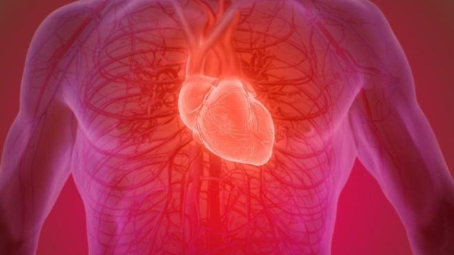 Is it possible to recover a human heart after death?