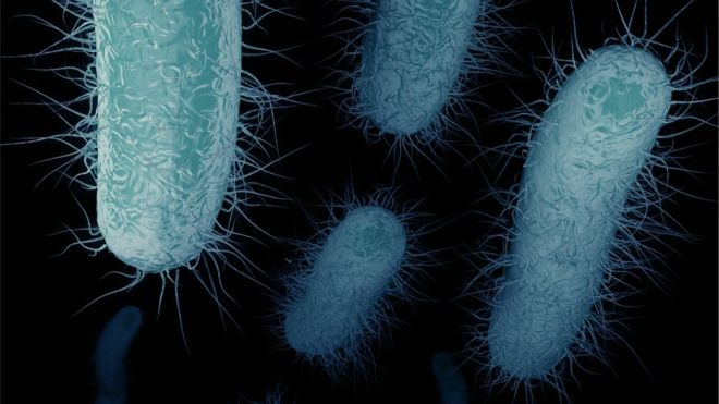"""CKD: the """"nightmare"""" bacteria that is worrying doctors in the United States"""
