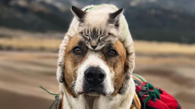 "Henry and Baloo: the traveling dog and cat that captivate thousands of Instagram users for their tender ""friendship"""