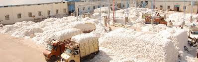 Cotton supply increases by 8%, bales unsold by ginners as prices become susceptible to increase