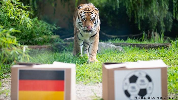 "Ten animals that ""predict"" World Cup results"