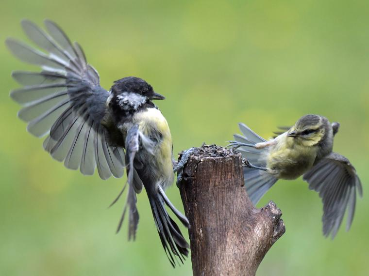 Heavy metals are becoming aggressive to birds