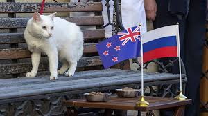 'Achilles' – The white psychic power cat predicts World Cup result