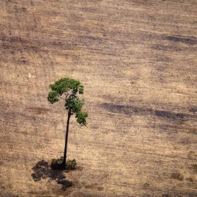 The world loses its forests faster than ever