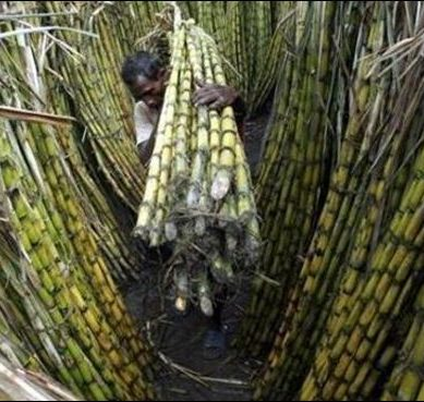 India increases sugarcane prices w.e.f October