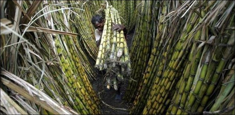 India increases sugarcane prices w.e.f October