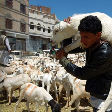 Eid al Adha: Animal Cruelty Contradicts the Spirit of Islam