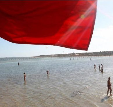 Red Sea Alert: Shark attacks Czech tourist