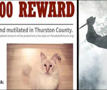 Animal sanctuary announces a $36,000 reward for a serial killer on the loose