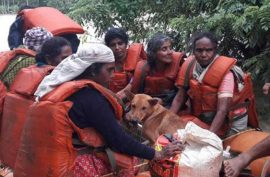 Woman in India refuses to vacate her home without her stray dogs despite the disastrous flood