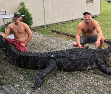 Florida: Hunters trap 750 pounds alligator after chasing it for over 4 hours
