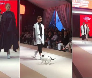 Cat graces the ramp during Turkey's fashion event 'catwalk'