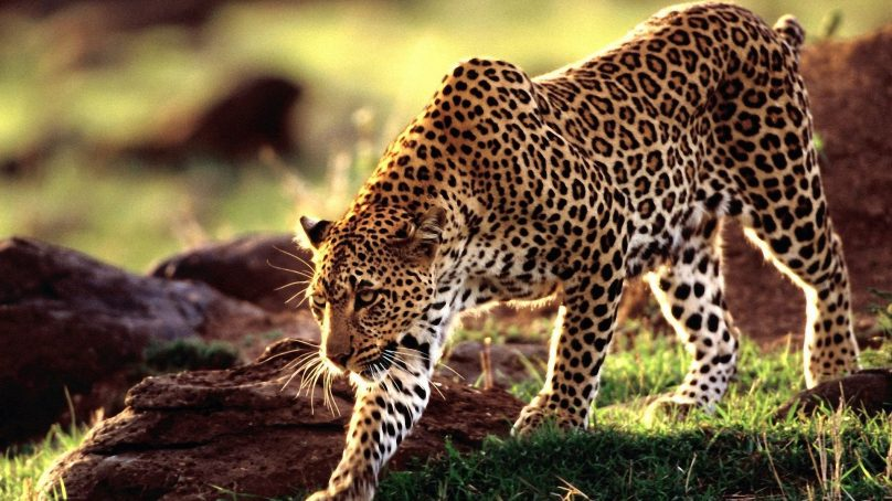 WWF: Wild animal population hurtles, dips 60% in 44 years