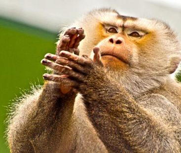 Monkey attacks a new-born in India, creates nationwide uproar