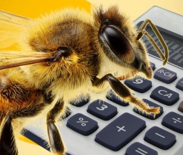 Bees brain smarter than humans, study reveals bees can perform basic maths