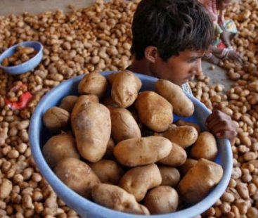 4 Indian Farmers sued for growing potatoes trademarked by PepsiCo