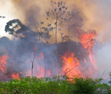 NASA reveals amount of carbon monoxide being released from burning Amazon