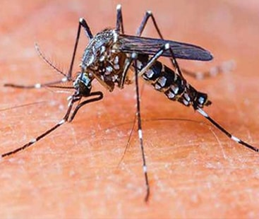 10,000 dengue cases marked in Pakistan