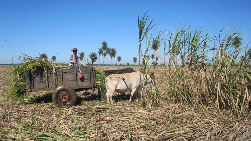 Sugar barons close mills as they stop buying from farmers