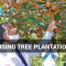 Promising Tree Plantation Drive-August Special