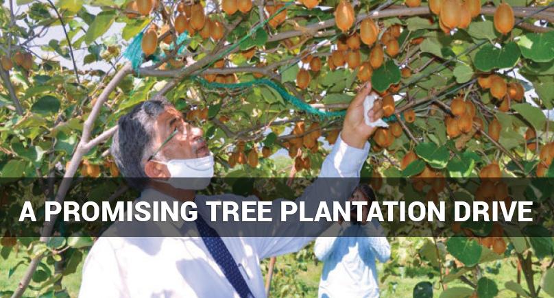 plantation 808x435