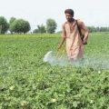 Engro Fertilizers' profit surges 111% to Rs7b