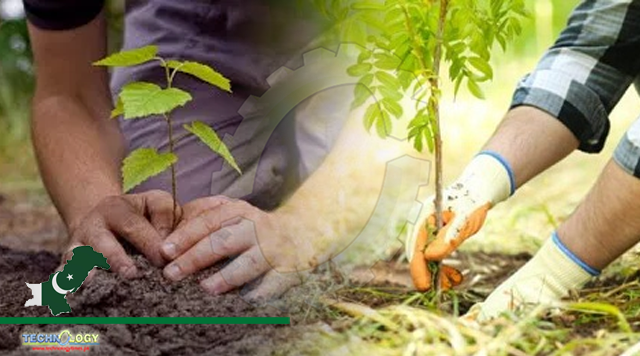 PPAF and Taraqee Foundation plant 80000 trees in Balochistan