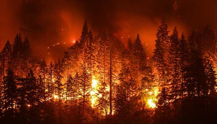 web_wildfire_shutterstock_710588278